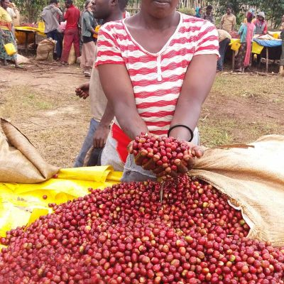 dawi_coffee_farm_ (11)