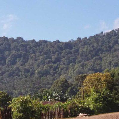 dawi_coffee_farm_ (13)