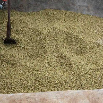 dawi_coffee_farm_ (23)