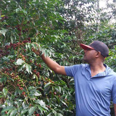 dawi_coffee_farm_ (7)